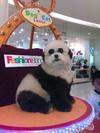 PandaNarak